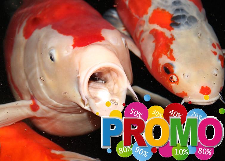 promo_koi